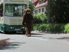 "img_1247P Motivwagen "" Märchenhafter Tierpark Sababurg"""